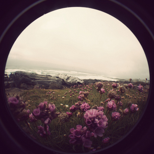 fisheye, flower, flowers, grass, ocean, photography, pretty, purple, rocks, water