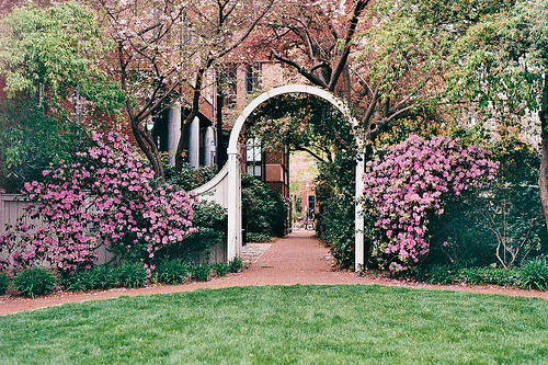 flowers, garden, photography, pretty, scenery, university