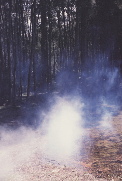forest, landscape, nature, outside, smoke