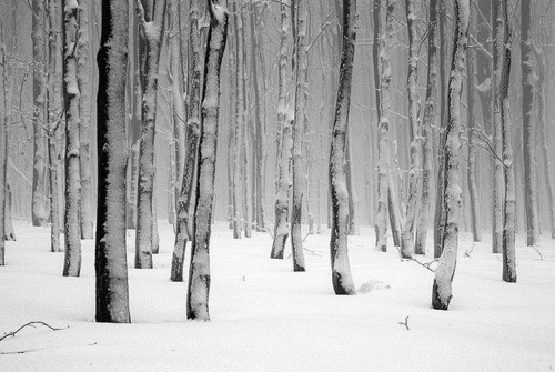 forest, landscape, nature, photo, photography, snow, trees, winter