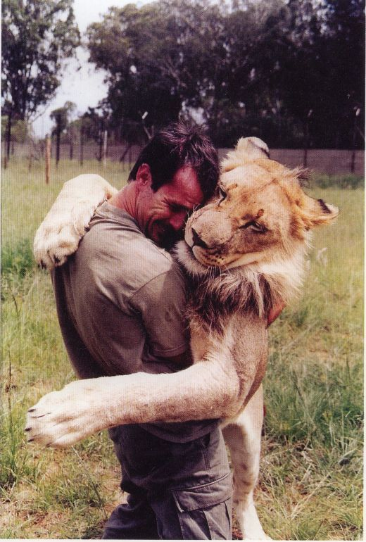 adorable, animal, happy, hug, lion, love, man, photography, sweet, wild
