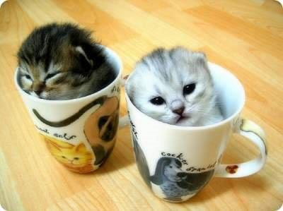 adorable, awe, baby, cat, cups