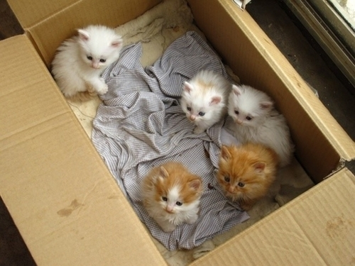 adorable, cats, cute, ginger cat, kawaii, kittens, white cats