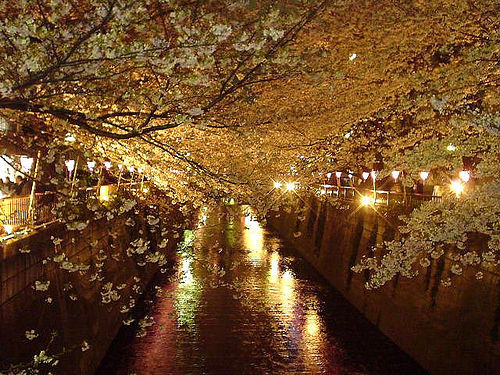 after dark, city, dark, flowering, flowering trees, light, lights, river, trees, urban