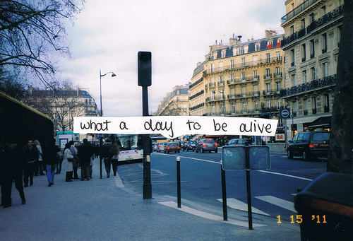 alive, car, cars, city, day