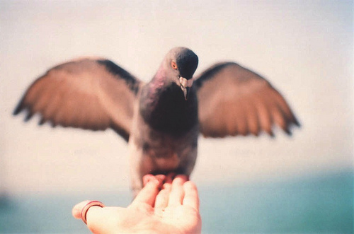 analogic, bird, film grain, pigeon