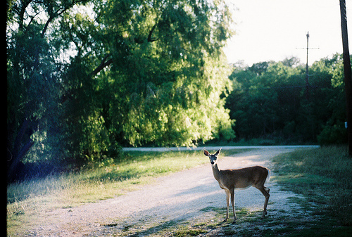 animal, awesome, deer, green, nature