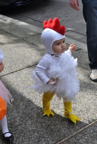 animal, baby, chicken, child, colors, cute, kid, love, photo, photography, picture, pretty, white