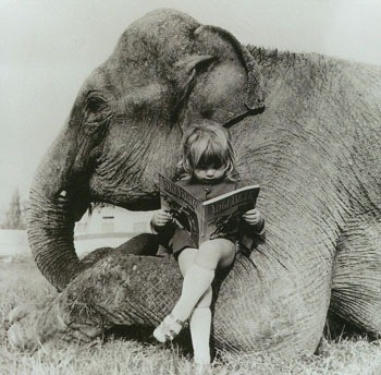 animal, black and white, children, elephant, kid