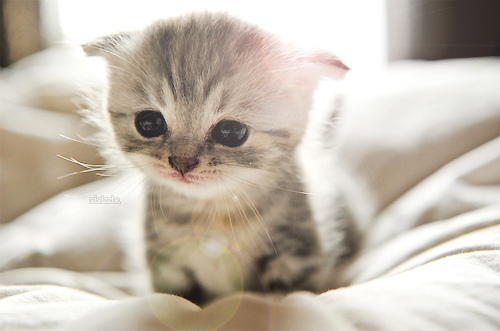 animals, aww, awww, baby, bokeh, cat, cute, kitten, kitty, photography