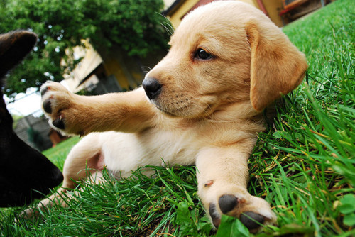 animals, cute, dog, puppies