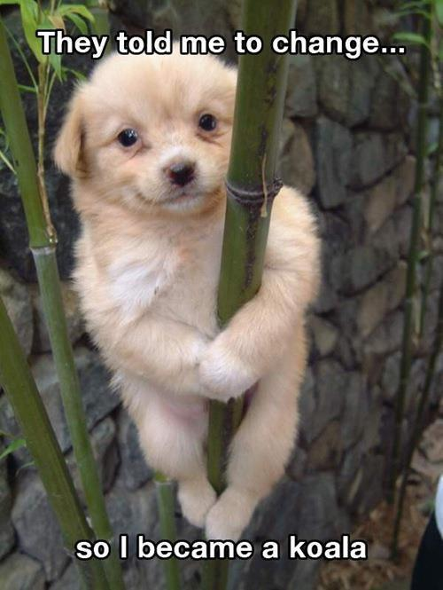 Animals cute pet funny animals koala lol lol animals puppy
