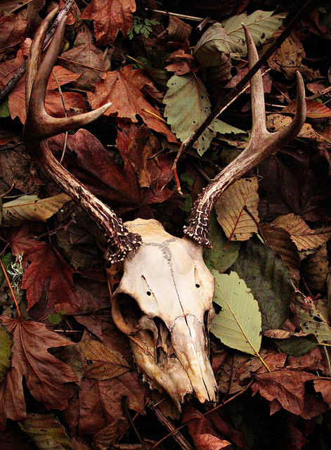 antlers, autumn, fall, leaves, nature, pagan, skull
