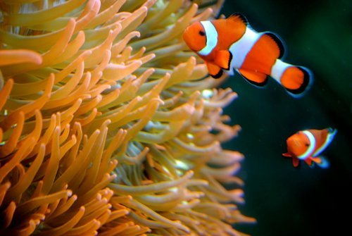 aquarium, beautiful, blue, cute, fashion, fish, love, ocean, orange, photography, pretty, sea, underwater