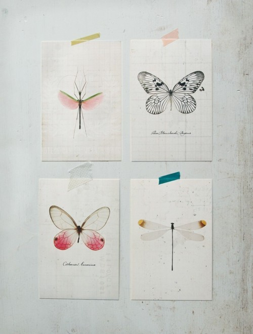 art, butterfly, dragonfly, drawing, white