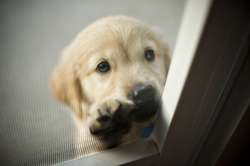 awwn, baby, beautiful, cute, dog, door, please, pretty