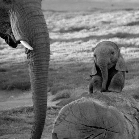 baby, black and white, cute, elephants
