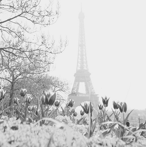 b&w, black & white, black and white, city of love, cute, eiffel tower, flower, flowers, france, landscape, paris, photography, place