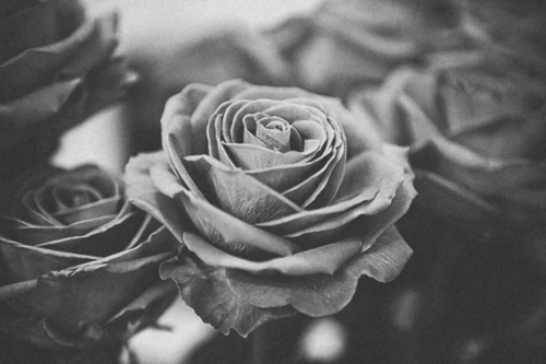 b&w, black and white, flower, flowers, photo