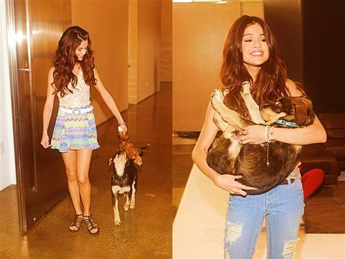 baylor, cute, dog, gomez, love