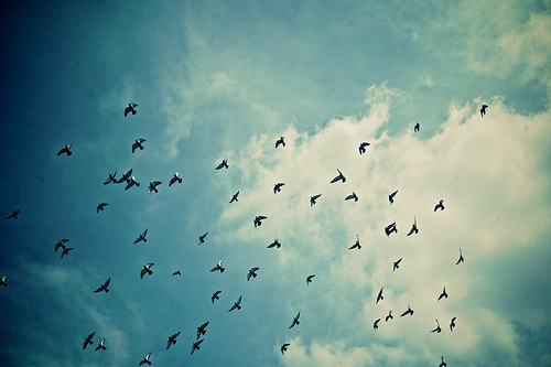 beautiful, birds, blue, cute, love, photography, sky