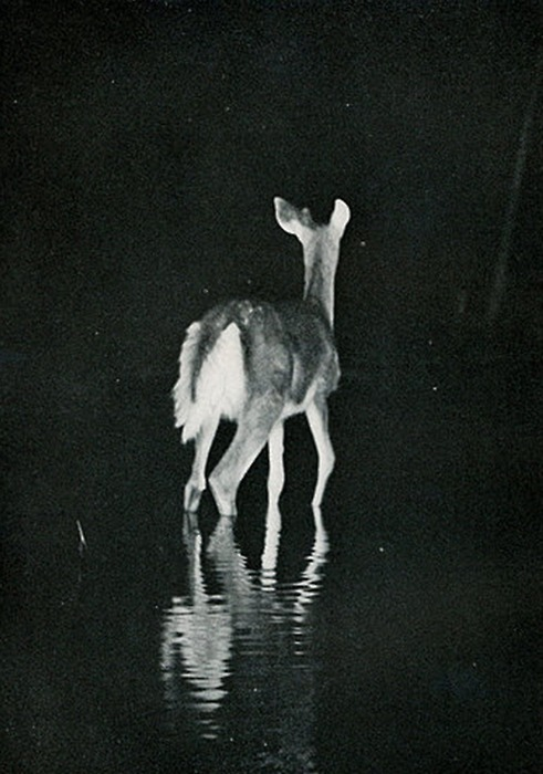 beautiful, black and white, deep, deer, night, photography, water