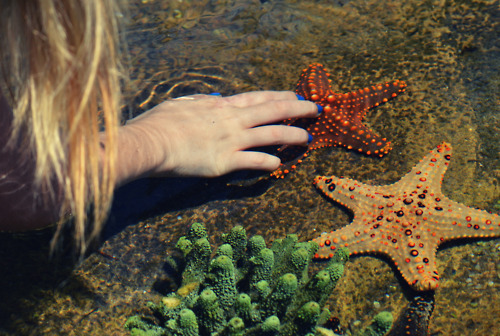 beautiful, blonde, blue, cool, cute, fashion, girl, good, green, love, makeup, model, nail polish, nails, ocean, orange, photo, photography, pretty, sand, sea, sea star, sexy, starfish, style, teenage