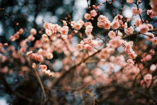 beautiful, blurry, flowers, nature, outdoors, pink, surreal, winter