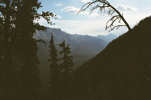 beautiful, film, forest, green, landscape, leaves, nature, photography, scenery, trees