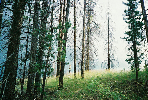 beautiful, film, forest, green, landscape