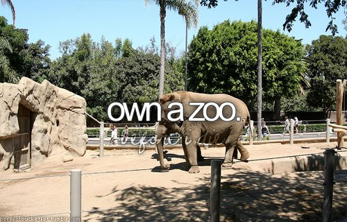 before i die, blog, bucket list, elephant, own