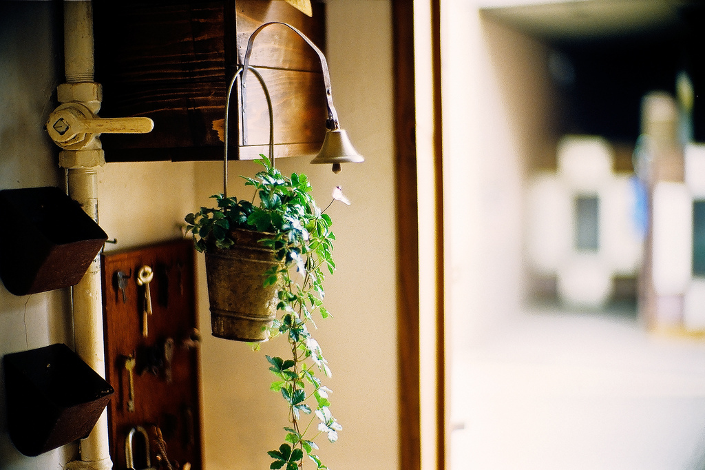 bell, decor, hanging, keys, plant