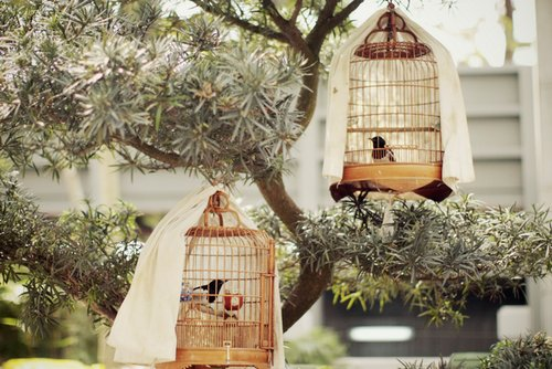 bird, bird cage, bird cages and birdcage