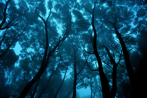 blue, forest, landscape, leaf, photography