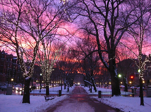 bright, lights, night, park, pretty, scenery, snow, trees, walk, winter