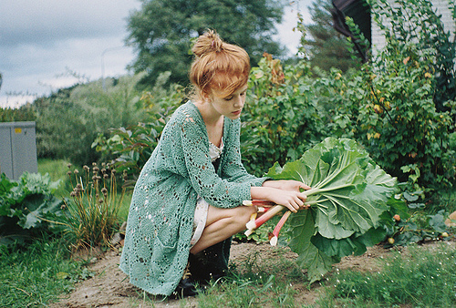 cardigan, garden, gardening, green, leaves
