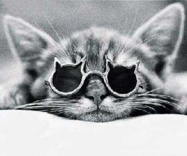 cat, glasses, kitty, photo, photography