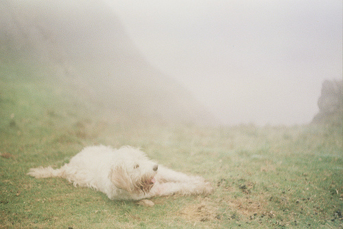 cute, dog, film, green, landscape