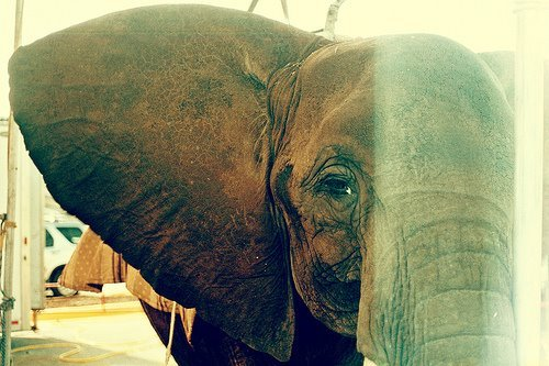 cute, elephant, photography