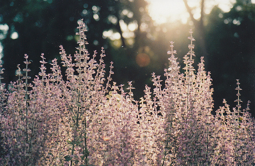 cute, flowers, light, nature, photography, pink, sun