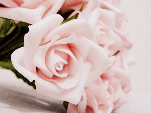 delicate, flowers, kind, love, lovely, pink, pink roses, roses, vintage, weary