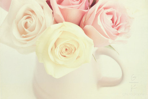 flower, flowers, pink, rose, roses