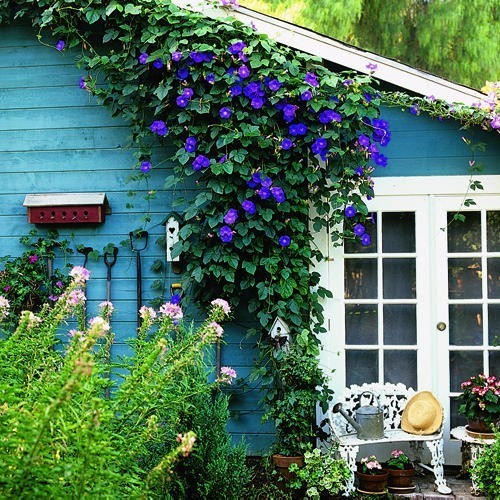 garden, home, house, loveley, nature