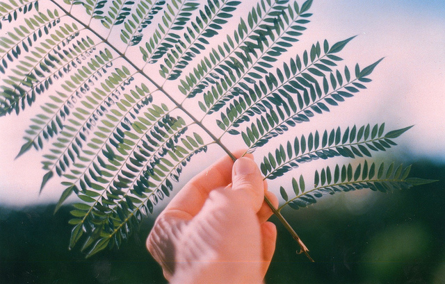 greem, hand, photography, plant