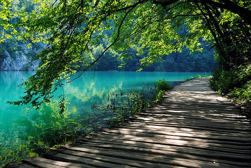 lake, landscape, nature, path, photography, tree
