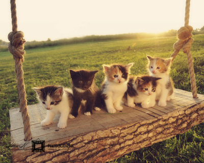 adorable, animal, animals, cat, cats