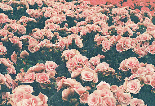 Beautiful blog pink rose flower tumblr vintage pink rose flower tumblr vintage mightylinksfo