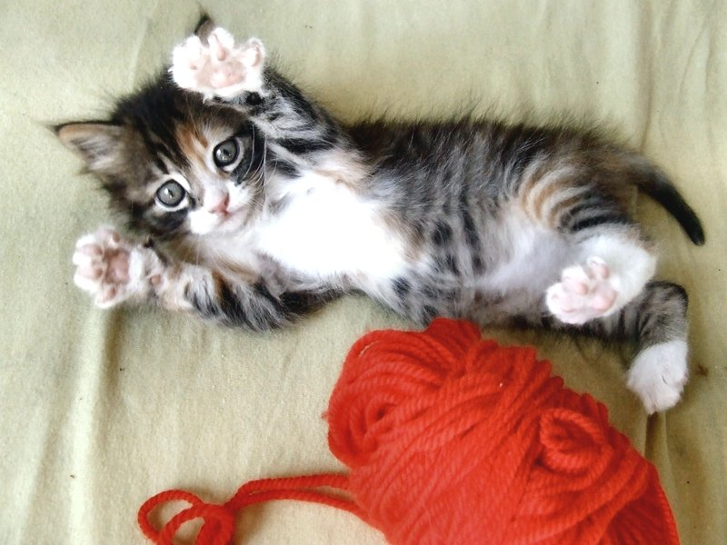 animal, baby, beautiful, cat, cat paw