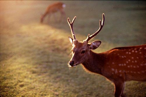 animal, cute, deer, photography, reindeer, spots