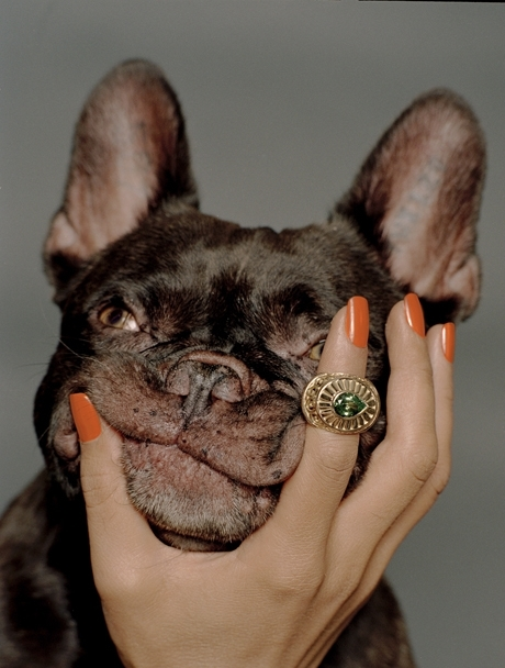 arm, bulldog, dog, nails, ring